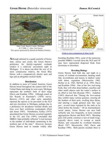 Green Heron - Michigan Breeding Bird Atlas Website
