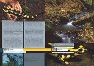 der feuersalamander.pdf - Karch