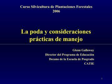 Poda y manejo 08-2006.pdf - Catie