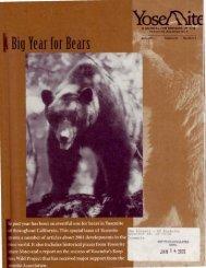 Yosetdte Big Year for Bears - Yosemite Online