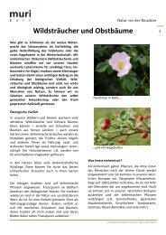 Wildsträucher und Obstbäume - Muri bei Bern