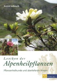Salvia miltiorrhiza#663 5 Samen chinesischer Salbei