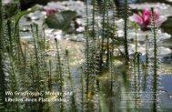 Wo Grasfrösche, Molche und Libellen ihren Platz ... - System Lehnert
