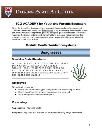 Sea Grasses Lesson Plan - Deering Estate at Cutler