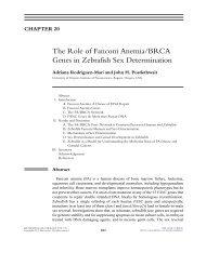 The Role of Fanconi Anemia/BRCA Genes in Zebrafish Sex ...