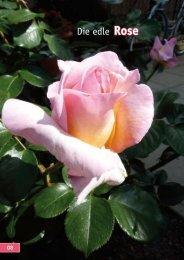 Rose 09 - Kiebitzmarkt