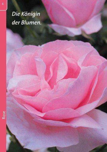 Rosenpflege von - Kiebitzmarkt
