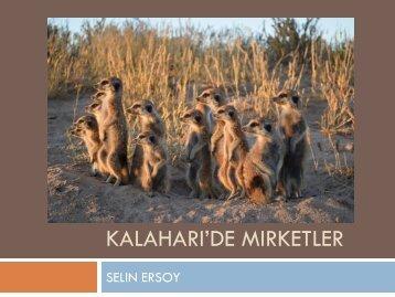Selin Ersoy Kalahari'de mirketlerle