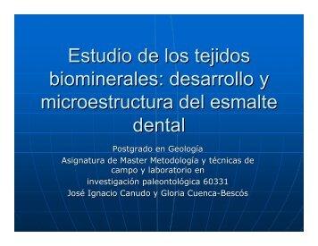 desarrollo desarrollo y microestructura ... - Aragosaurus