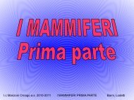 I.c Manzoni Ornago a.s. 2010-2011 I MAMMIFERI PRIMA PARTE ...