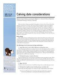 Calving date considerations