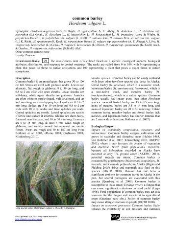 common barley Hordeum vulgare L. - University of Alaska