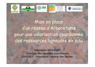 Mise en place d'un réseau d'Arboretums pour une ... - GIP-Ecofor