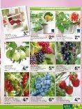 sommer - Gartencenter Fahr Dornstetten - Seite 5