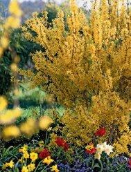 Nahlédnout do Řez zahradních rostlin - Krok za krokem