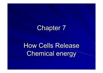 Chapter 7 Powerpoint (PDF)