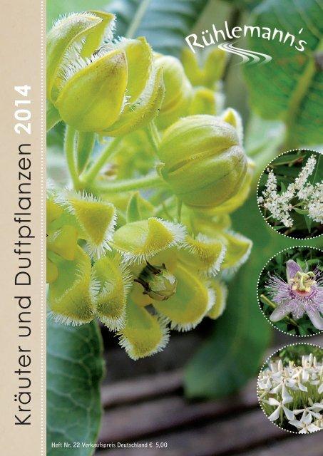 Samen  Verschiedene Sorte Osmanthus fragrans Süße Duftblüte
