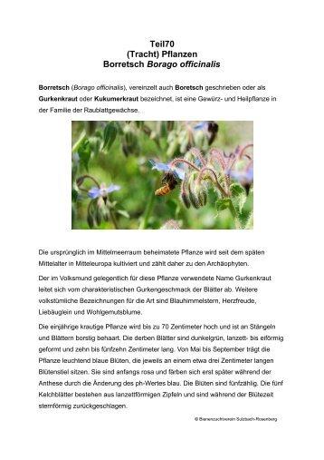 Teil70 (Tracht) Pflanzen Borretsch Borago officinalis