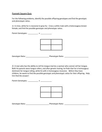 Pictures Punnett Square Worksheet Human Characteristics Answers - pigmu