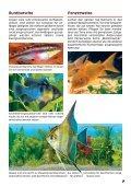 So richte ich mein Aquarium ein - Aquaristik-Shop - Seite 7