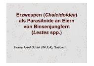 Erzwespen (Chalcidoidea) als Parasitoide an Eiern von ... - INULA