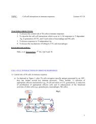 TOPIC: Cell-cell interactions in immune responses Lecture #13-14 ...