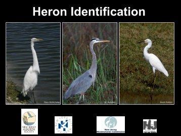 Species ID