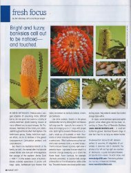Fresh Focus (August, 2011) - Resendiz Brothers Protea Growers