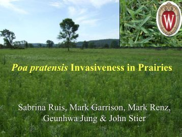 Abundance of Poa pratensis as an Invasive Species in the Prairie ...