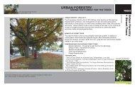 URBAN FORESTRY - Green Futures Lab - University of Washington