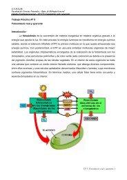 TP Nº 5 Fotosíntesis. - Facultad de Ciencias Naturales