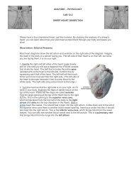 Lab 12-2 Cardiovascular Sheep Heart Dissection - Physics-matters.net