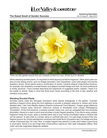 Print Article - Lee Valley Tools