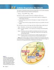 2.2 Cellular Respiration: The Details