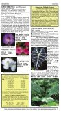 Bulb Growers Since 1900 - Brent and Becky's Bulbs! - Page 3