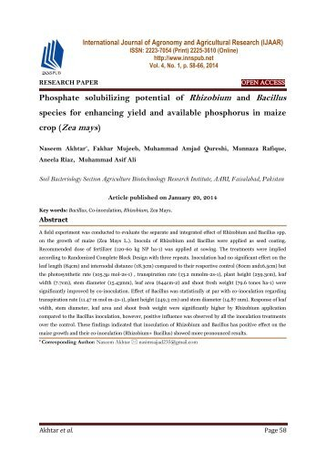 Phosphate solubilizing potential of Rhizobium and Bacillus species for enhancing yield and available phosphorus in maize crop (Zea mays)