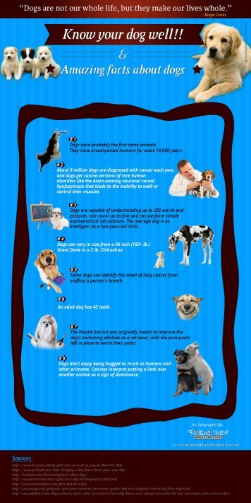 An Infographic on Rare Dog Facts