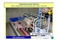 Leptospirose beim Schwein - Tierklinik St. Veit