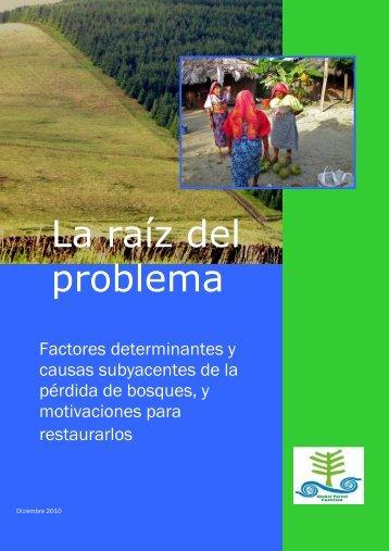La raíz del problema - Critical Information Collective