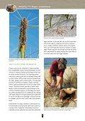 Pingao - Dune Restoration Trust - Page 3