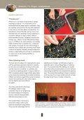Pingao - Dune Restoration Trust - Page 5