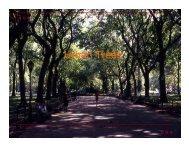 Urban Trees - City of Dallas