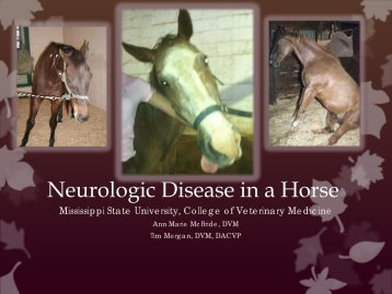 Neurologic Disease in a Horse - University of Georgia College of ...