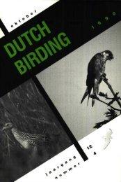 v-i Ppr' - Dutch Birding