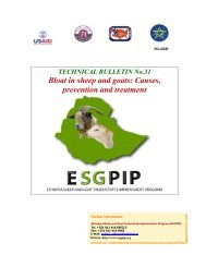 Bloat in sheep and goats: Causes, prevention and treatment - esgpip