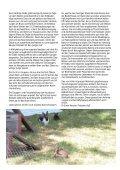 Die gedruckte Ausgabe im pdf-Format - VgT - Seite 5
