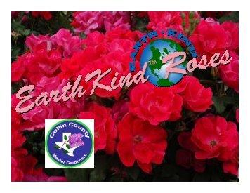 Earth Kind Roses