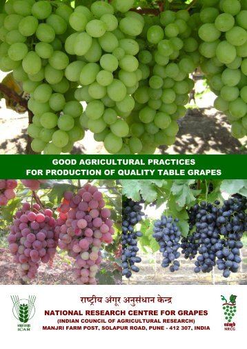 GAP table grapes - National Research Centre for Grapes