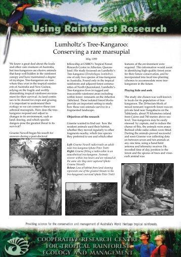 Lumholtz's Tree-Kangaroo: Conserving a rare marsupial - Rainforest ...