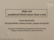 Slide #69 peripheral blood smear from a foal - University of Georgia ...